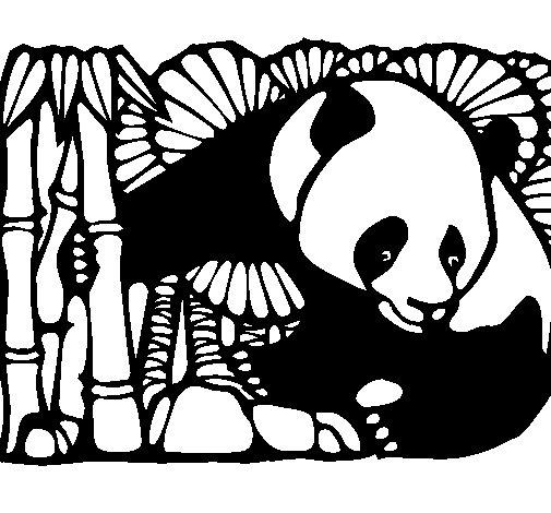 Dibujo de Oso panda y bambú para Colorear