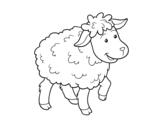 Dibujo de Oveja común para colorear