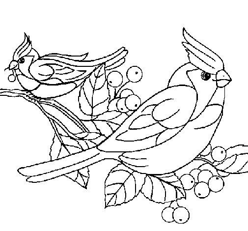 Dibujo de Pájaros para Colorear