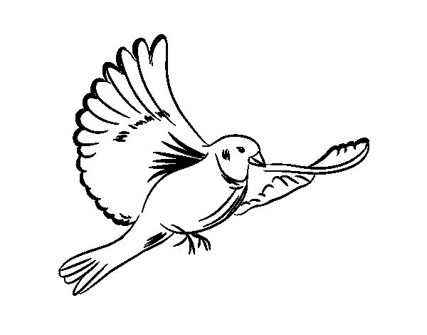 Dibujo de Paloma blanca para Colorear  Dibujosnet