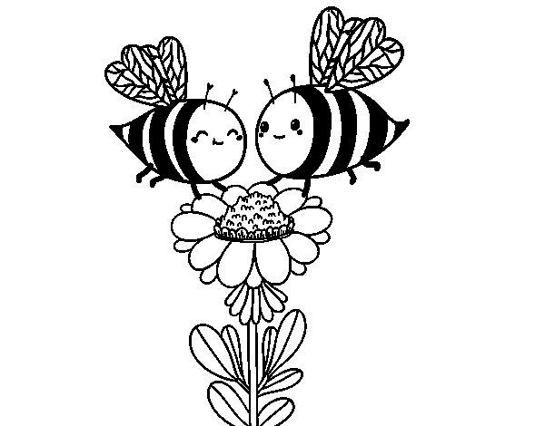 Dibujo de Pareja de abejas para Colorear