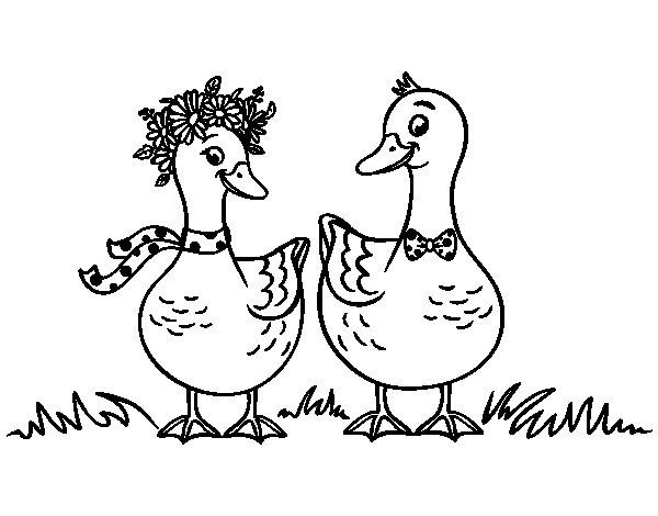 Dibujo de Pareja de patos para Colorear  Dibujosnet