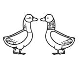 Dibujo de Pato hembra y pato macho