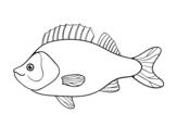 Dibujo de Perca para colorear