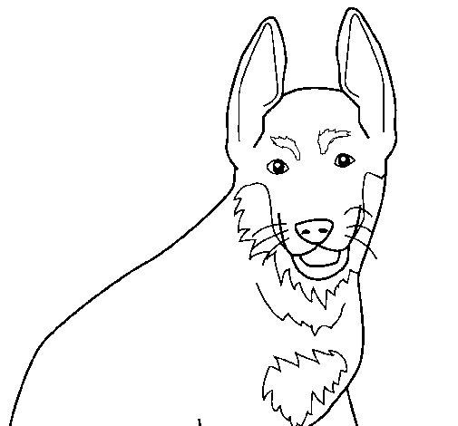 Dibujo de Perro 4a para Colorear