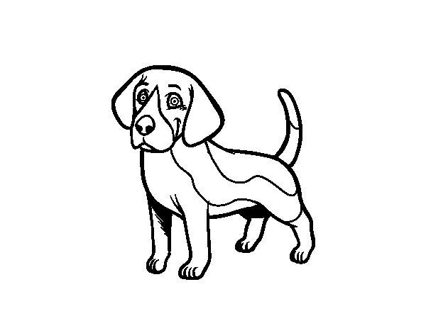 Mandalas De Perros Debuda Net Con Dibujos Para Colorear De: Dibujo De Perro Beagle Para Colorear
