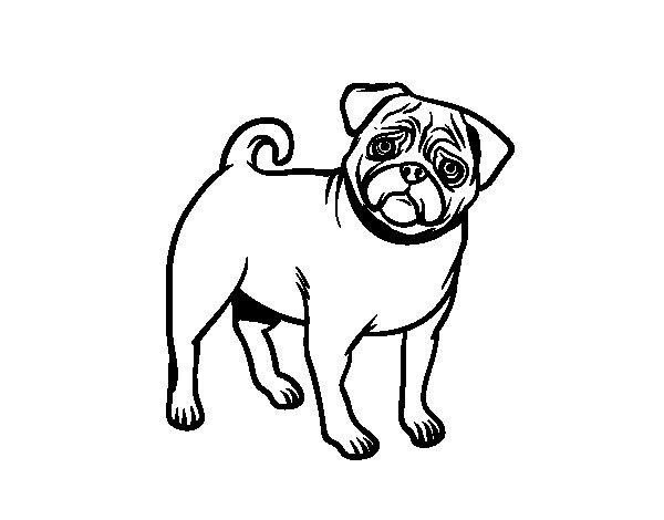 Dibujos Infantiles De Perros Para Colorear: Dibujo De Perro Carlino Para Colorear