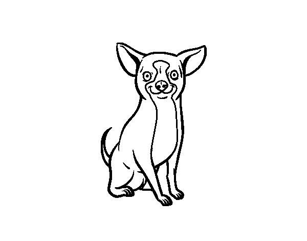 Dibujos Para Imprimir Y Colorear De Perros: Dibujo De Perro Chihuahua Para Colorear