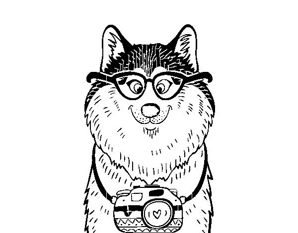 Dibujos Para Colorear De Cachorros De Perros: Dibujo De Perro Fotógrafo Para Colorear