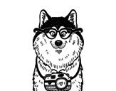 Dibujo de Perro fotógrafo para colorear