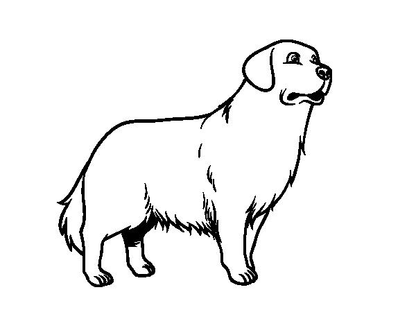 Dibujo de perro golden retriever para colorear - Dessin golden retriever ...