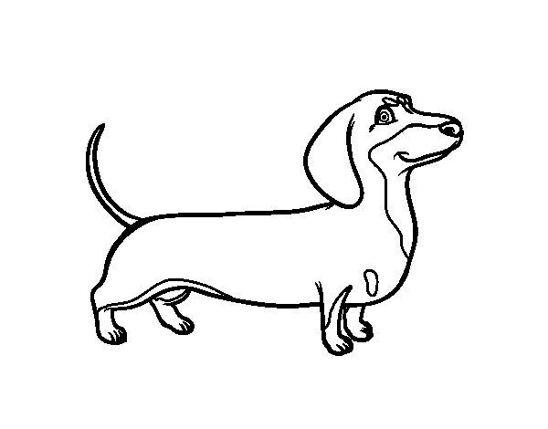 Dibujo de Perro salchicha para Colorear  Dibujosnet