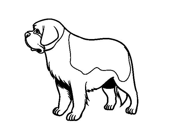 Dibujos Para Colorear De Cachorros De Perros: Dibujo De Perro San Bernardo Para Colorear