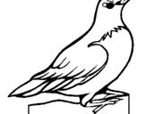 Dibujo de Petirrojo para colorear
