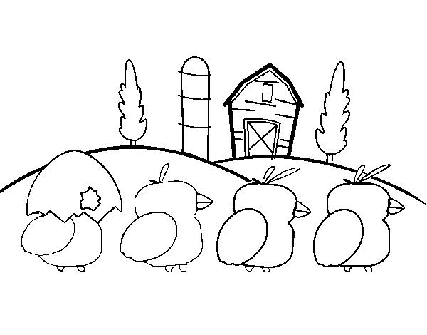 Dibujo de Pollitos para Colorear