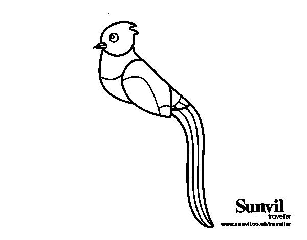 Dibujo de Quetzal para Colorear  Dibujosnet