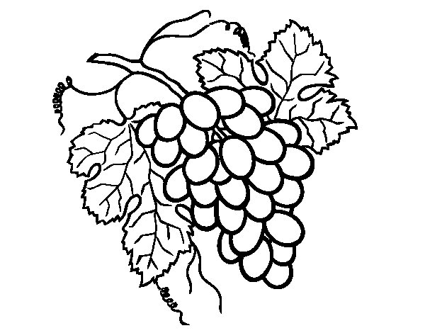 Dibujo de Racimo de uvas para Colorear