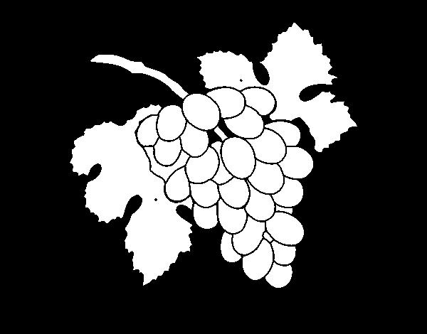 Dibujo de Racimo de uvas para Colorear  Dibujosnet