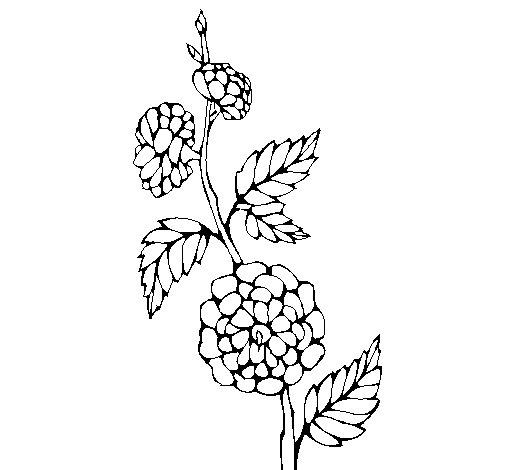 Dibujo de Rama con flores para Colorear