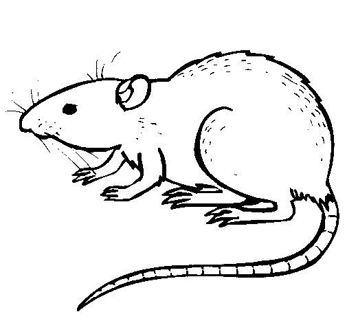 Dibujo de Rata subterrena para Colorear  Dibujosnet