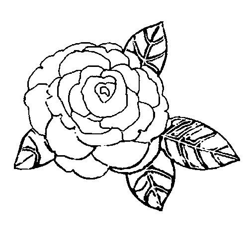 Dibujo de Rosa 2 para Colorear