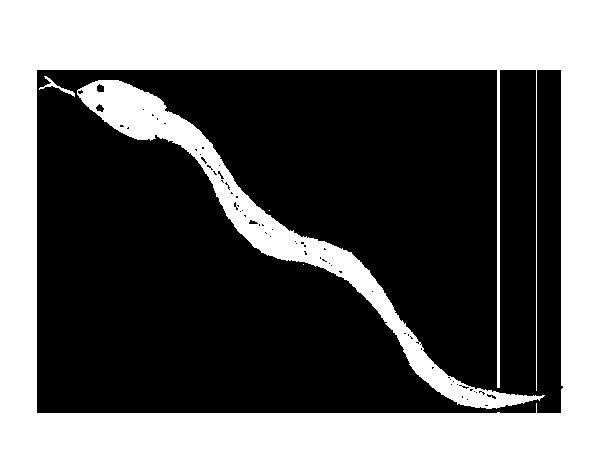 Dibujo de Serpiente venenosa para Colorear