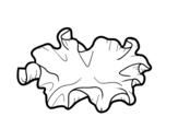 Dibujo de Seta kikurage para colorear