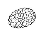Dibujo de Seta trufa para colorear