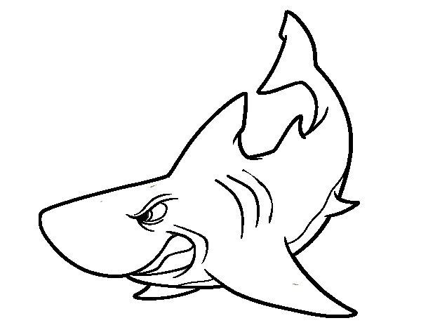 Dibujos Animados De Tiburones Para Colorear: Dibujo De Tiburón Enfadado Para Colorear