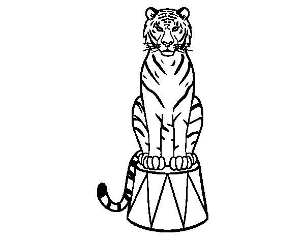 Dibujo de Tigre de circo para Colorear  Dibujosnet