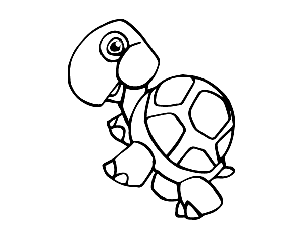 Dibujos De Animales Terrestres Para Colorear E Imprimir: Dibujo De Tortuga Terrestre Para Colorear