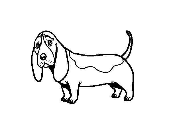 Dibujo de Un Basset hound para Colorear