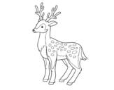 Dibujo de Un ciervo joven para colorear