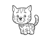 Dibujo de Un gato doméstico para colorear