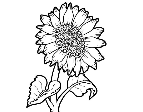 Dibujo de Un girasol para Colorear  Dibujosnet