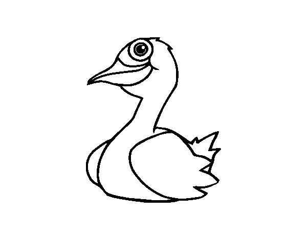 Dibujo de Un pato para Colorear