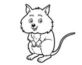 Dibujo de Un pequeño hámster para colorear