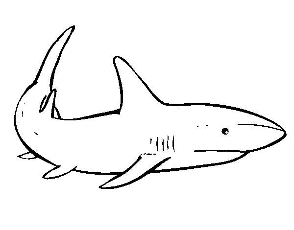 Dibujo de Un tiburón nadando para Colorear