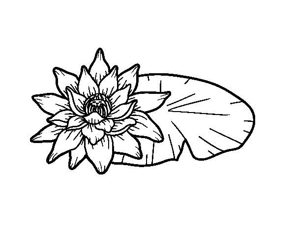 Dibujo de Una flor de loto para Colorear