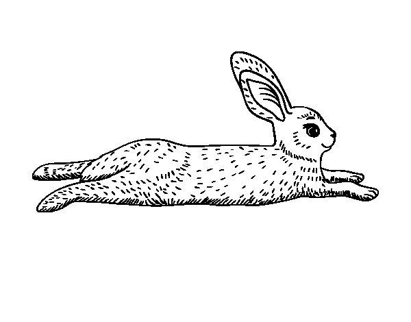 Dibujo de Una liebre para Colorear