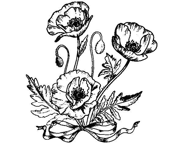 Dibujo de Unas amapolas para Colorear  Dibujosnet