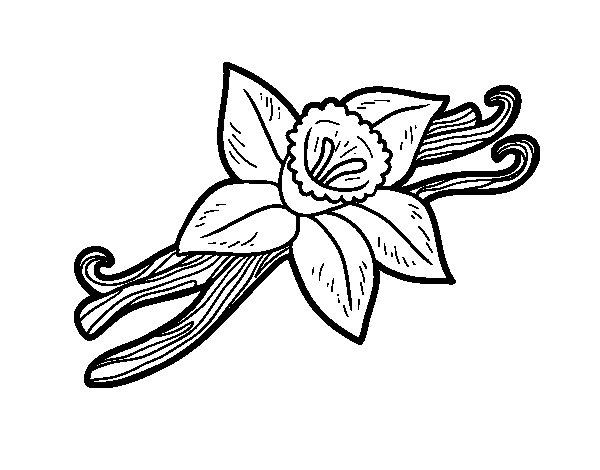 Dibujo de Vainilla para Colorear  Dibujosnet