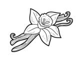 Dibujo de Vainilla para colorear