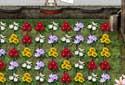 Jugar a Flores de colores de la categoría Juegos de estrategia