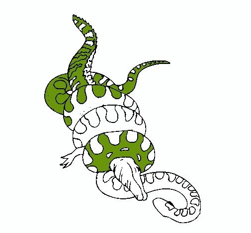 Dibujo de Anaconda y caimán pintado por Lauralopez en Dibujos.net el ...