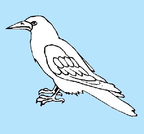 Dibujo De Cuervo Pintado Por Manueltwitter En Dibujosnet