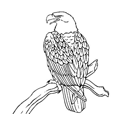 Dibujo de Águila en una rama pintado por Vane en Dibujos.net el día ...