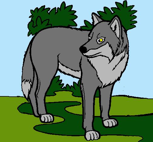 Dibujo De Lobo Pintado Por Lobo En Dibujosnet El Día 19 02 11 A Las