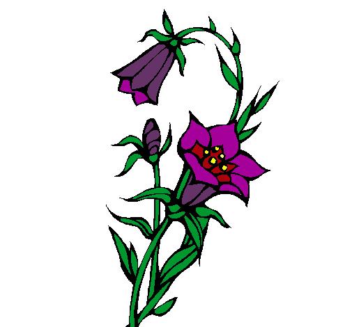 Dibujo De Flores Silvestres Pintado Por Flower En Dibujos Net El Dia