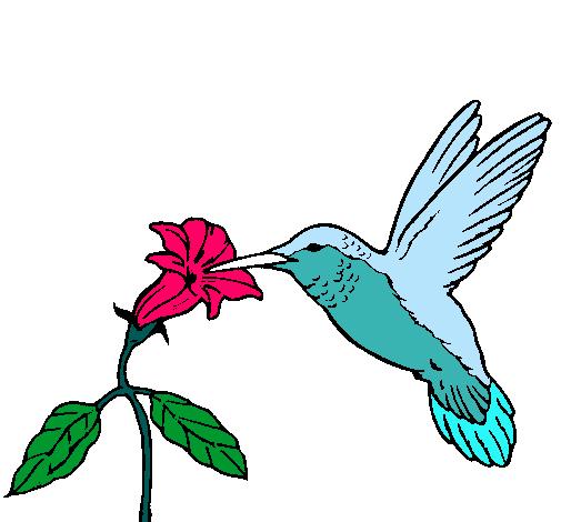 Dibujo de Colibrí y una flor pintado por Cilibri en Dibujos.net el ...